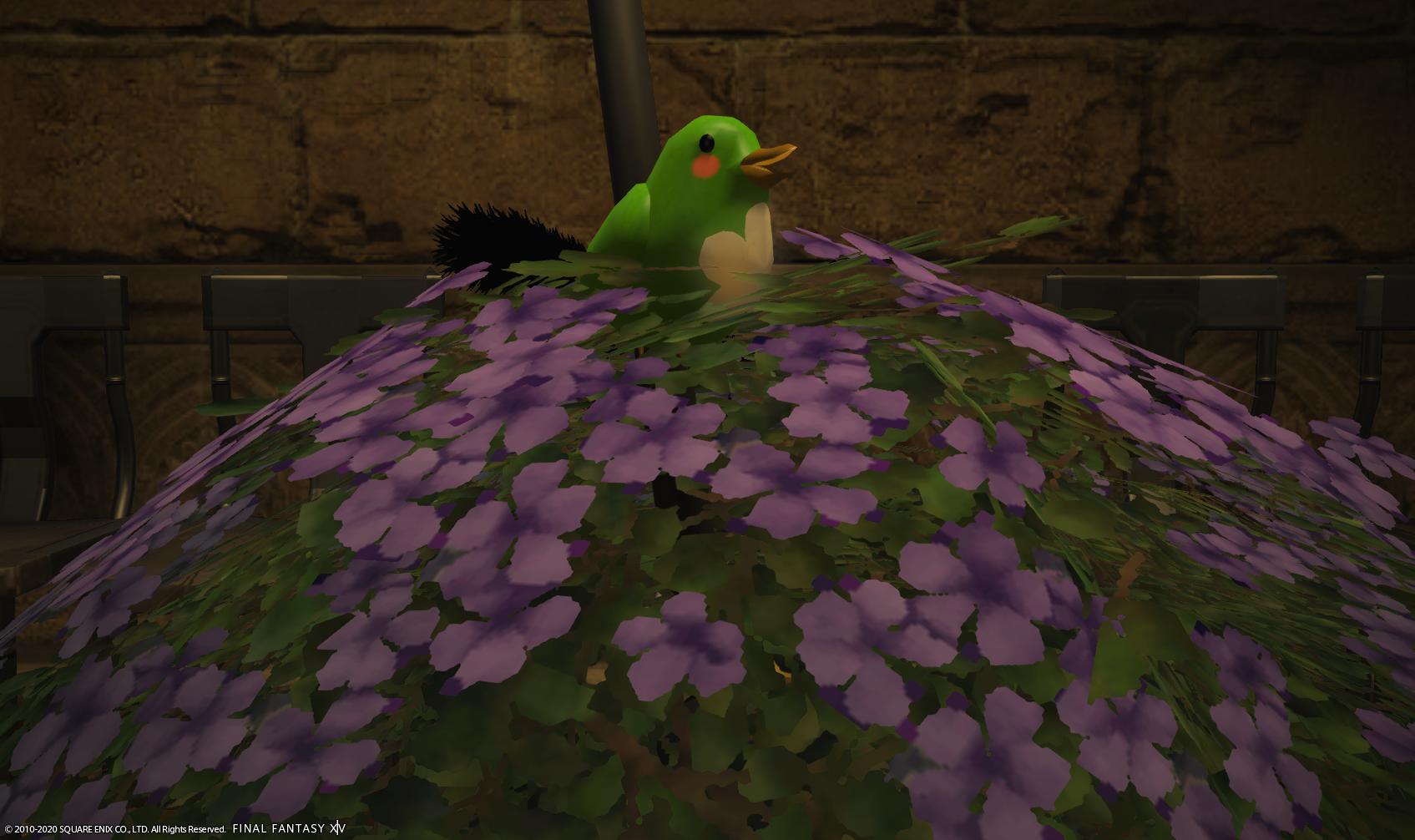季節イベって大事よね!?プリンセスデーはじまりました~♪隠しモグ鳥発見!?